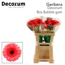 GE GR Bubble gum Decorum