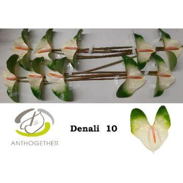 ANTH A DENALI 10.