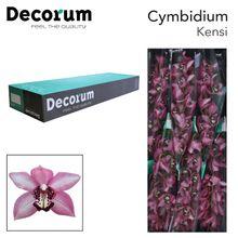 CYMB T KENSI Decorum 80cm.