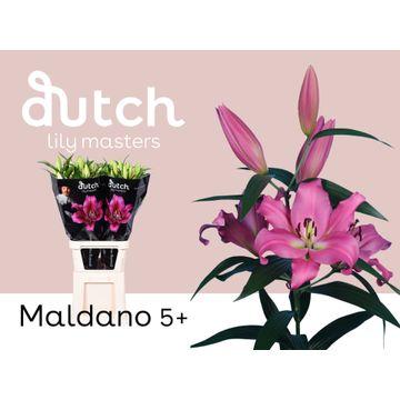 LI OT MALDANO 5+.