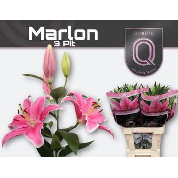 LI OR MARLON 3 pit.