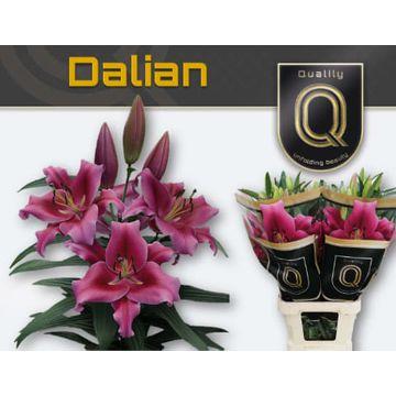 LI OT DALIAN  5+.