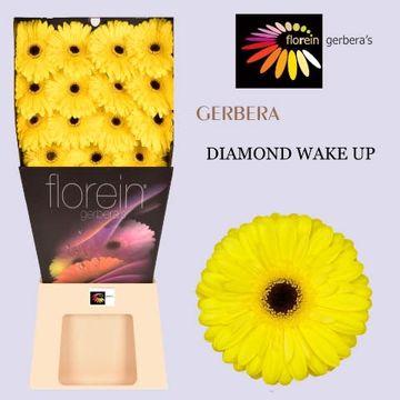 GE GR WAKE-UP