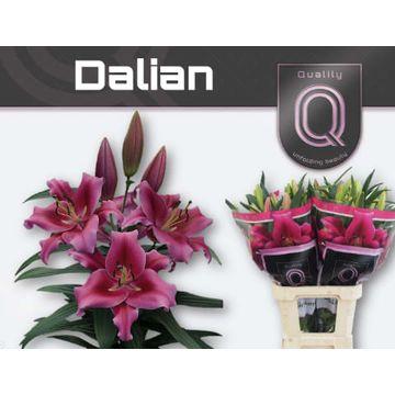 LI OT DALIAN  4+.
