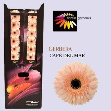 GE GR CAFE DEL MAR