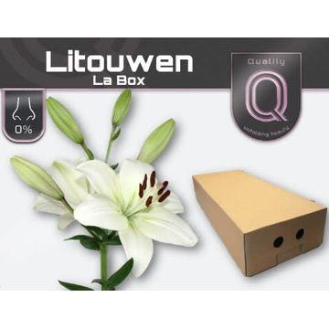 LI LA LITOUWEN LA BOX 4+.