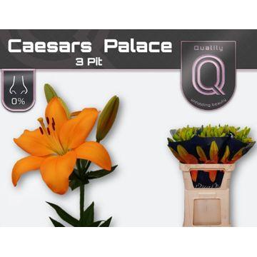 LI LA CAESARS PALACE 3 pit.