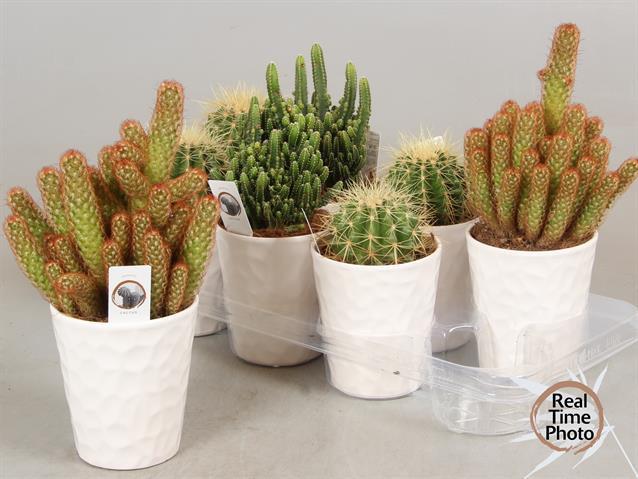 Cactus Gem