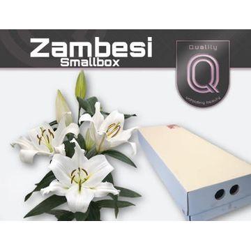 LI OT ZAMBESI SMALLBOX 4+ .