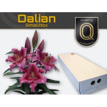 LI OT DALIAN  SMALLBOX 5+.