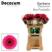 GE GR Picobello Decorum