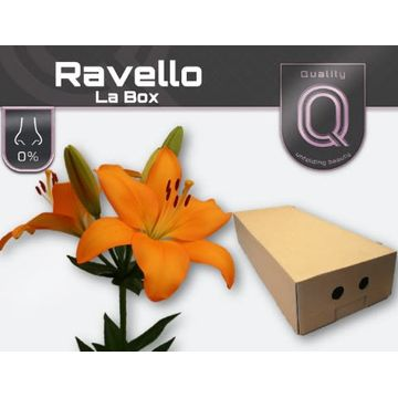 LI LA RAVELLO LA BOX 4+.