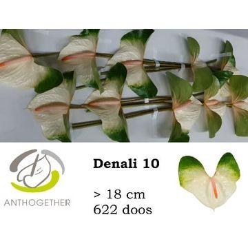 ANTH A DENALI 10 622.