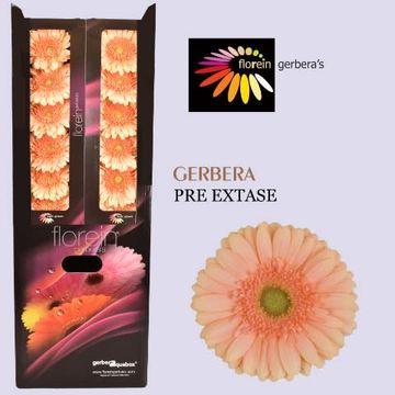 GE GR PRE - EXTASE