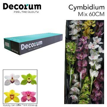 CYMB GEM Decorum 60cm.