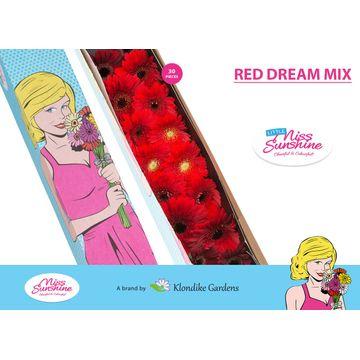 GE MI MIXED RED DREAM