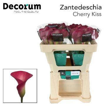 ZANT CHERRY KISS .