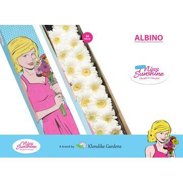 GE MI ALBINO DS