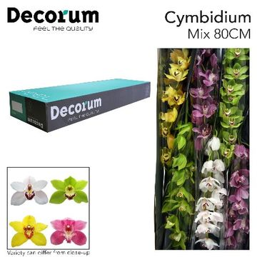 CYMB GEM Decorum 80cm.