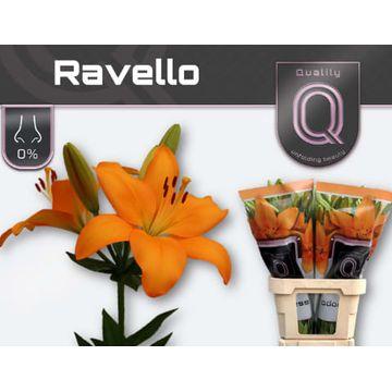 LI LA RAVELLO 4+.