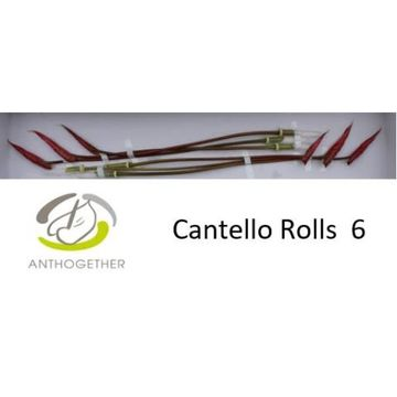 ANTH A CANTELLO Rolls