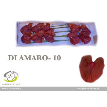 ANTH A DI AMARO 10.