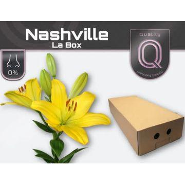 LI LA NASHVILLE LA BOX 4+.