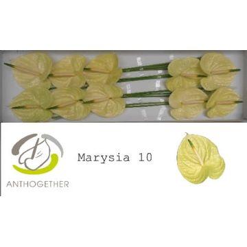 ANTH A MARYSIA 10.