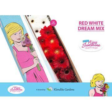 GE MI MIXED RED WHITE DREAM