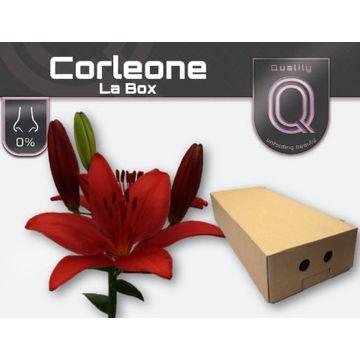 LI LA CORLEONE LA BOX 4+.