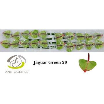 ANTH JAGUAR GREEN