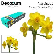 Narcissus Grand Soleil d'Or Box Leenen 2 x 50.