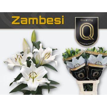 LI OT ZAMBESI MAGNUM 5+.