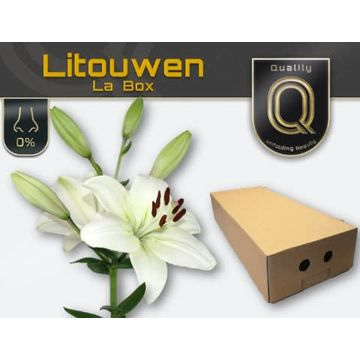 LI LA LITOUWEN MAGNUM LA BOX 5+.