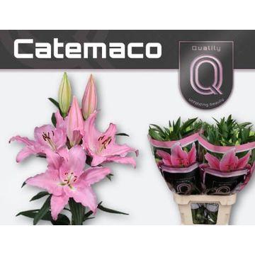 LI OR CATEMACO 4+.