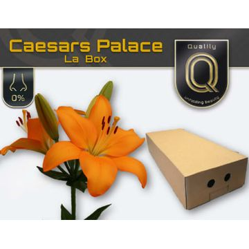 LI LA CAESARS PALACE LA BOX 5+.