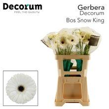 GE GR Snow King Decorum