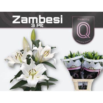 LI OT ZAMBESI 3+ .